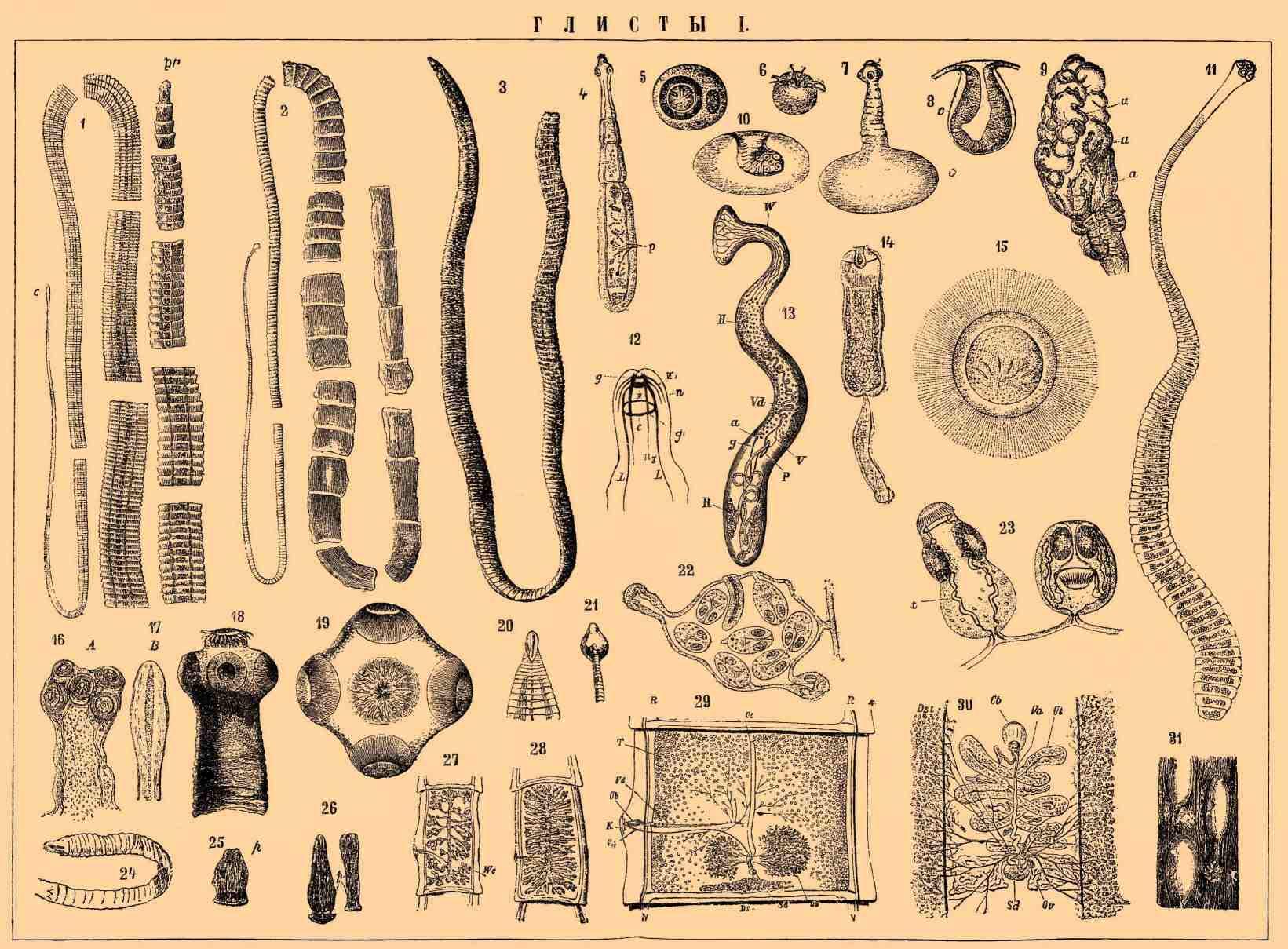 черви на теле человека картинки