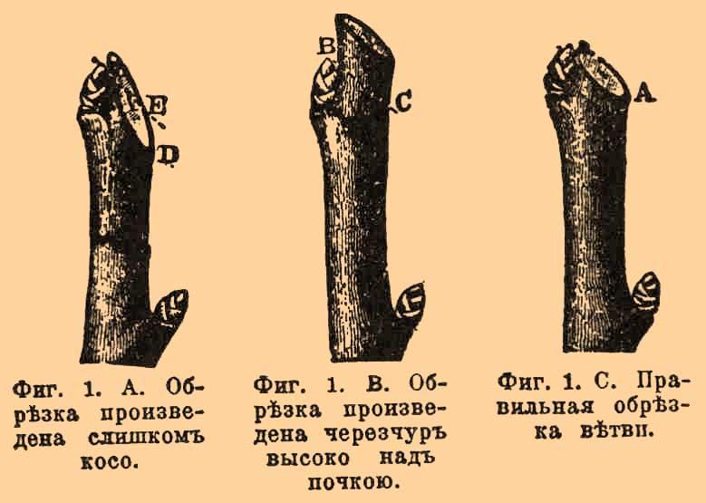 encyclopediyaRU-42_585-1.jpg