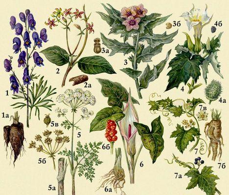 Молочай таракар и другие ядовитые комнатные растения