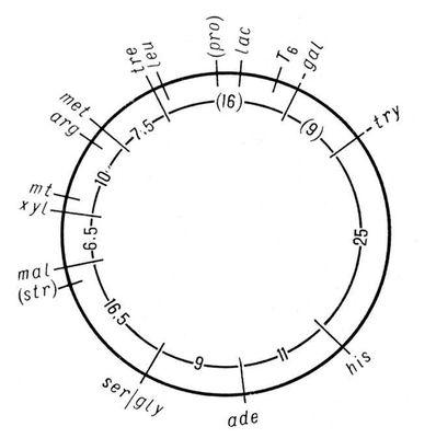 генетична карта хромосом